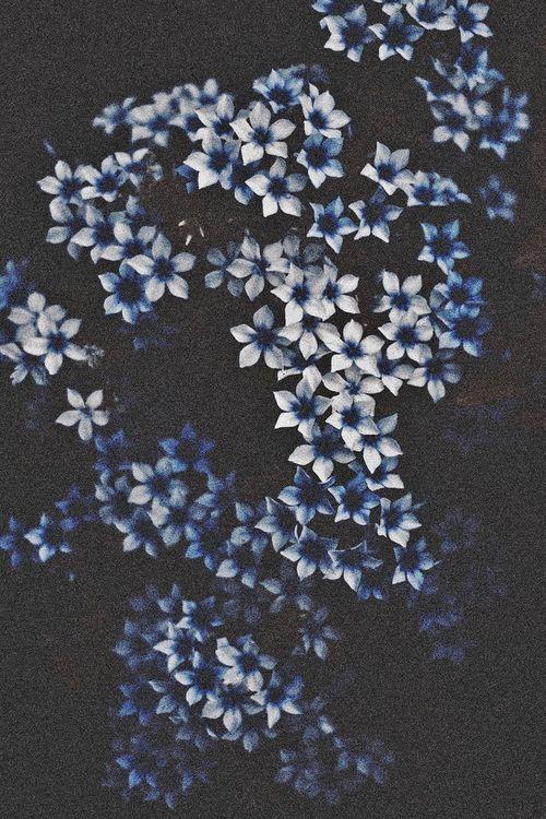 blue-flowers-1